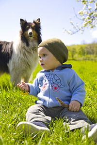 Dog---child-with-Collie